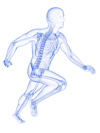 runner-skeleton